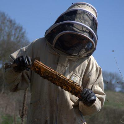 Filberts-of-Dorset-BeekeepingIntro