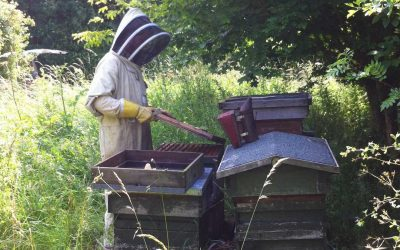 A day in the life of a beekeeper