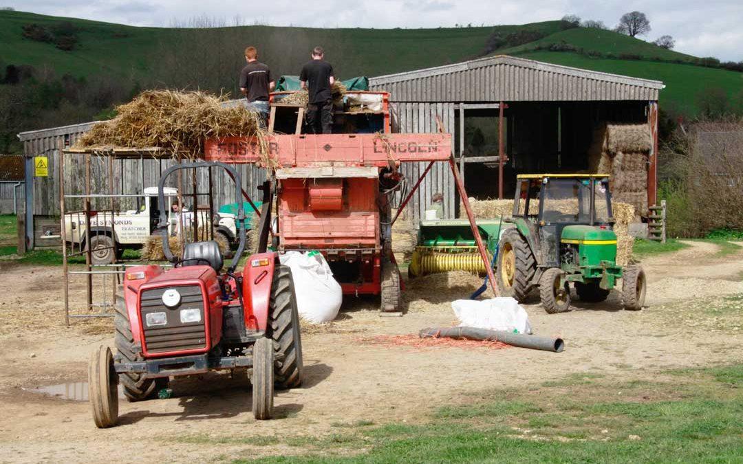 Filberts-of-Dorset--BLOG-April_Threshing&Beekeeping