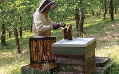 Beekeeping Courses in West Dorset