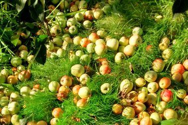 Bee Feeding, Harvesting & Pressing