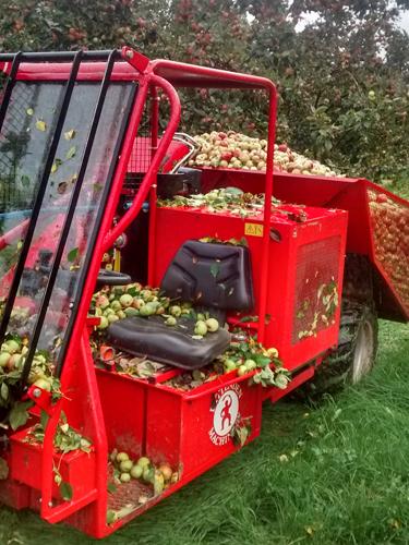 Filberts of Dorset - Bee Feeding, Harvesting & Pressing_3
