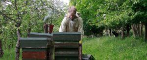 Filberts of Dorset Beekeeping