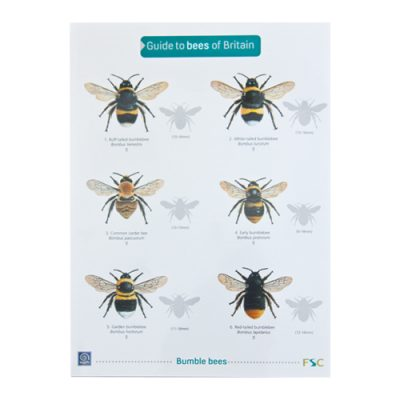 Bee Guide
