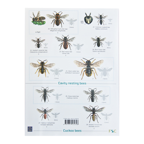 Funny guide to bees and wasps.
