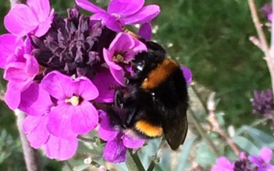 Helping Out Tired Bumblebees